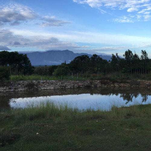 Dhole's Den, Bandipur Tiger Reserve