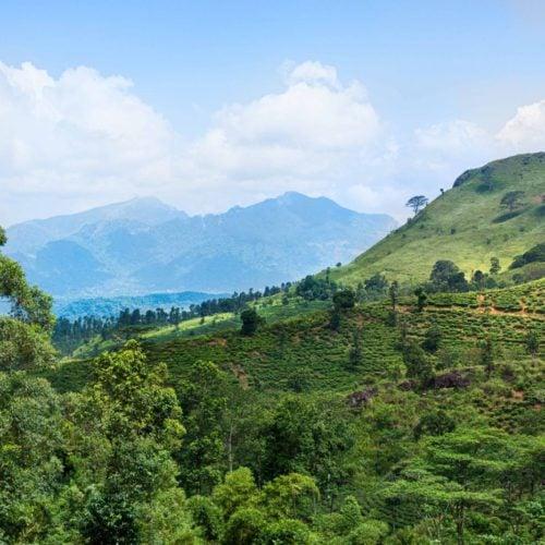 Ashburnham Estate, Kandy