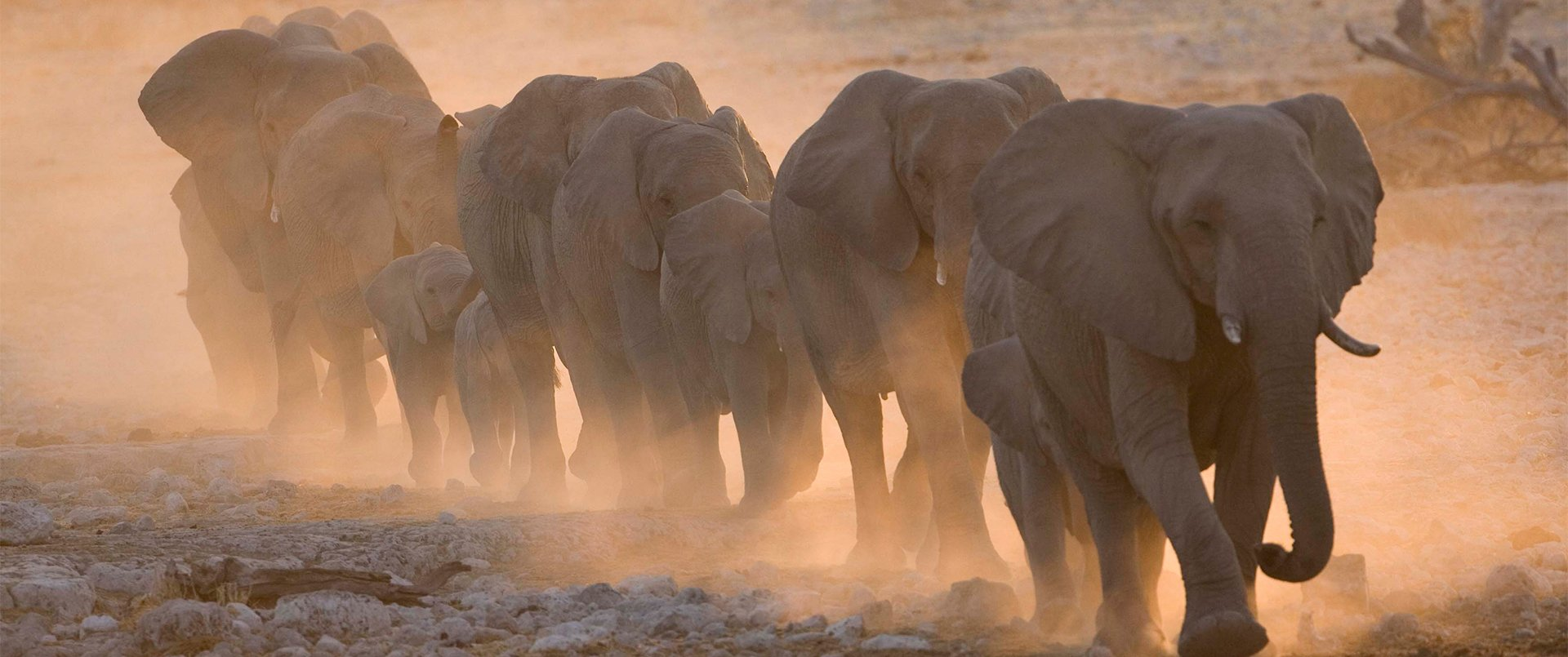 Namibia with Wild Insights