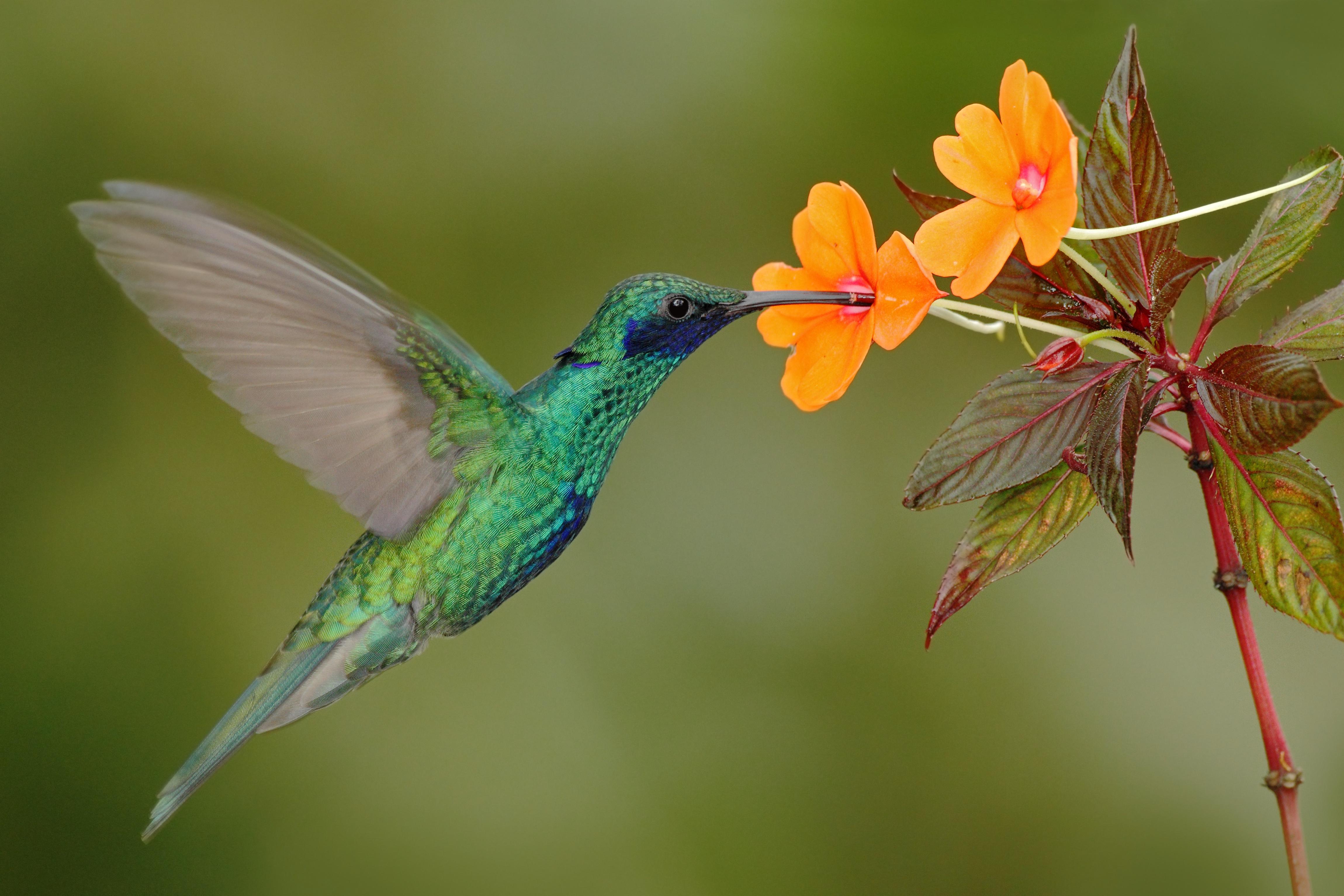 Ecuador with Wild Insights