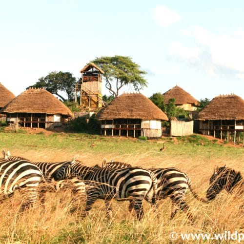 Apoka Safari Lodge, Kidepo Valley National Park