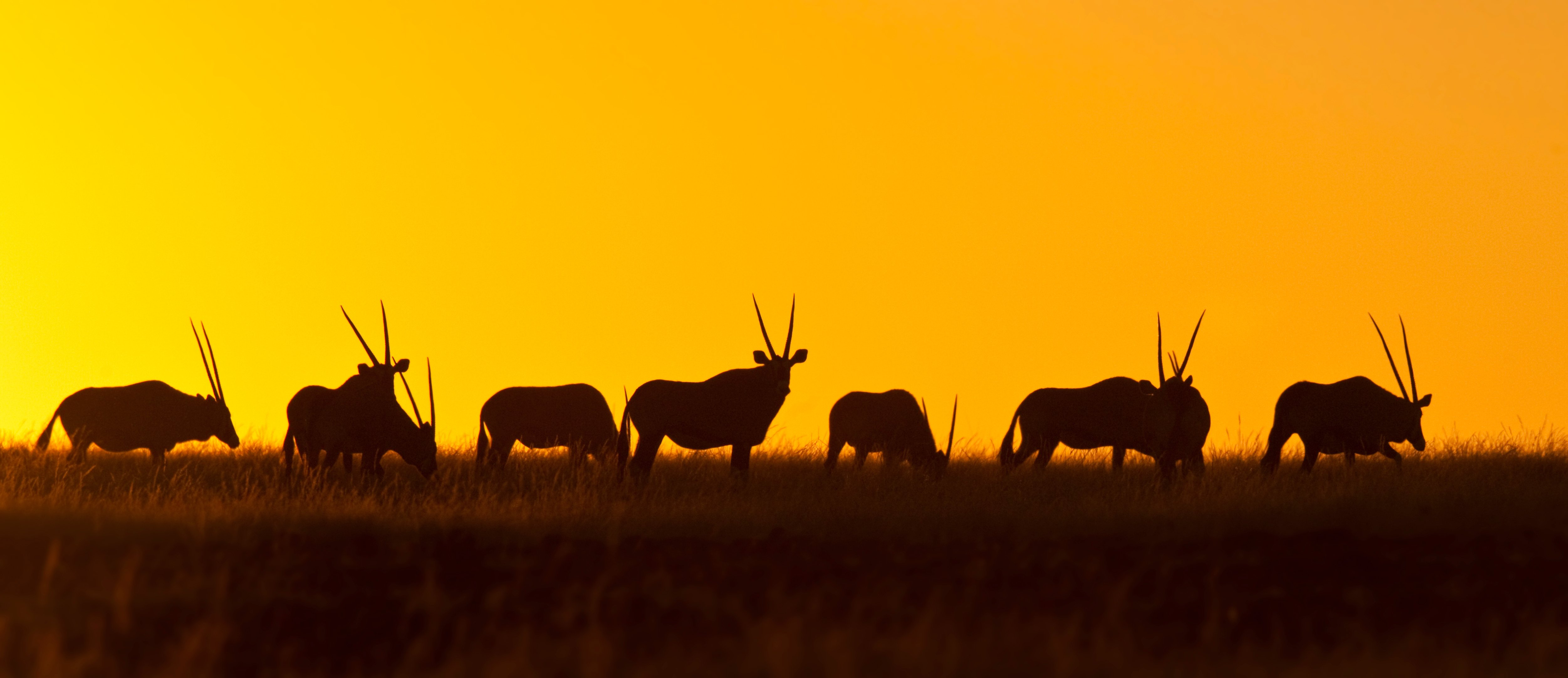 The Namibia Experience