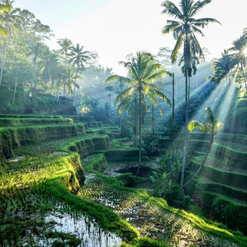 Ultimate Indonesia