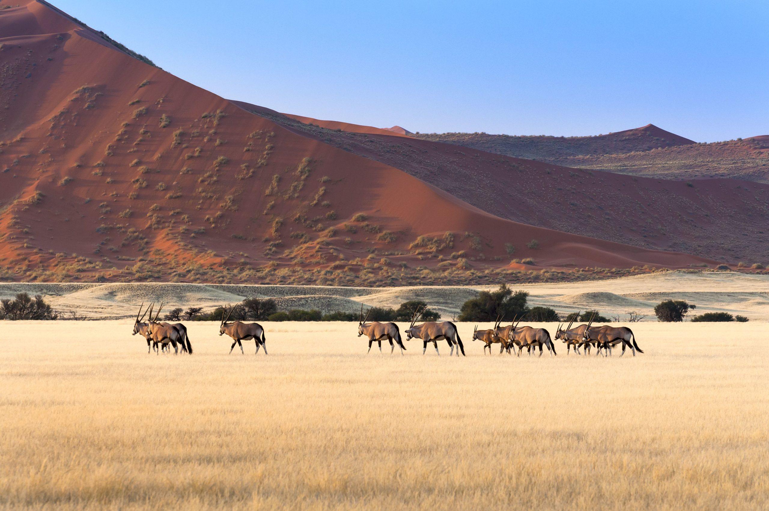 A Scenic Journey through Namibia