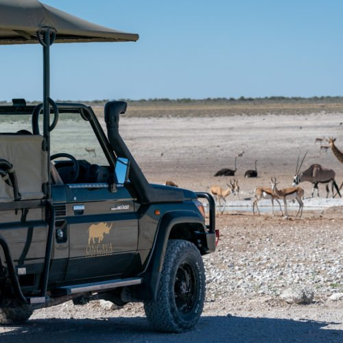 Andersson's at Ongava, Etosha National Park