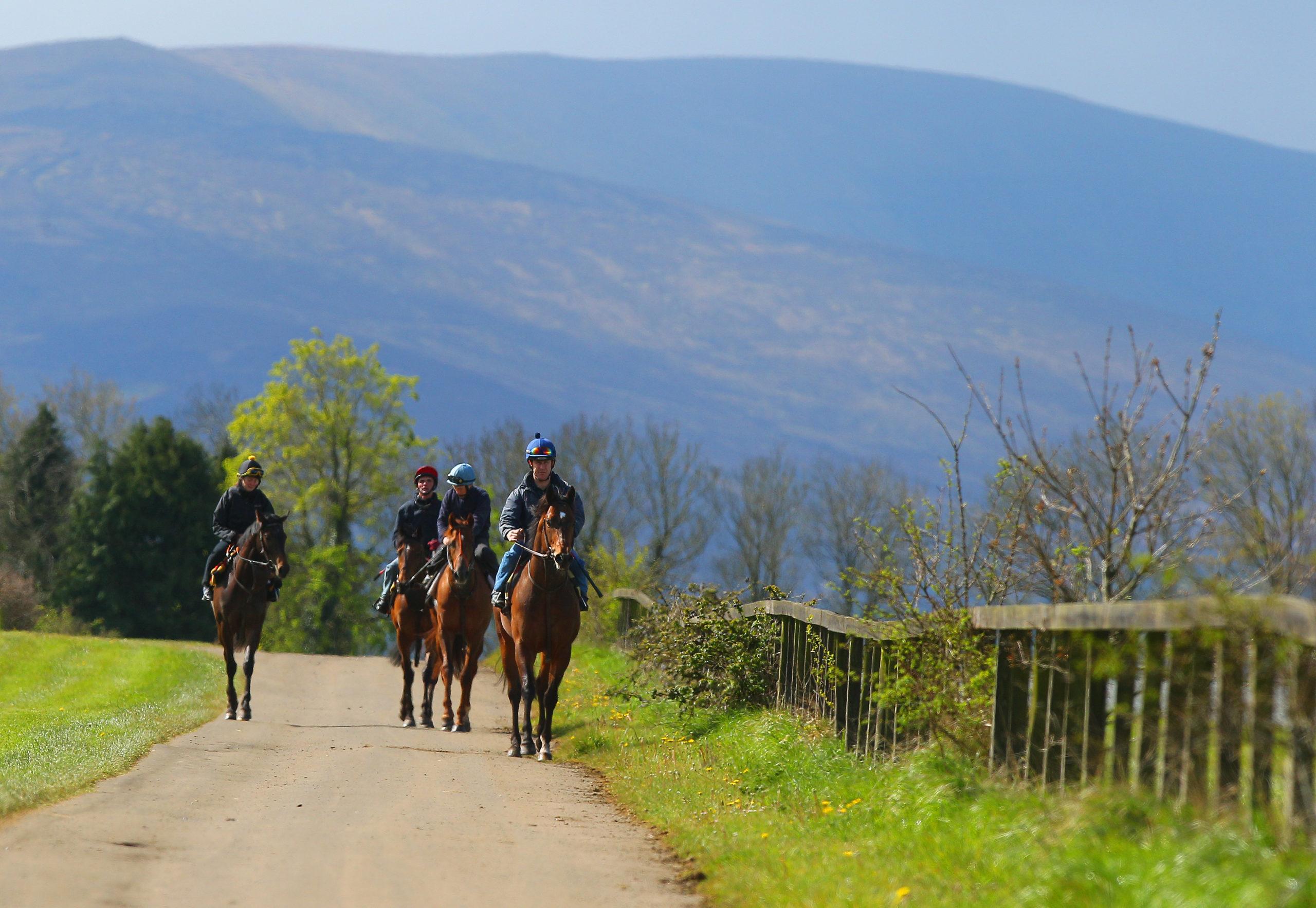 Irish Gardens, Houses & Horses: The Inside Track