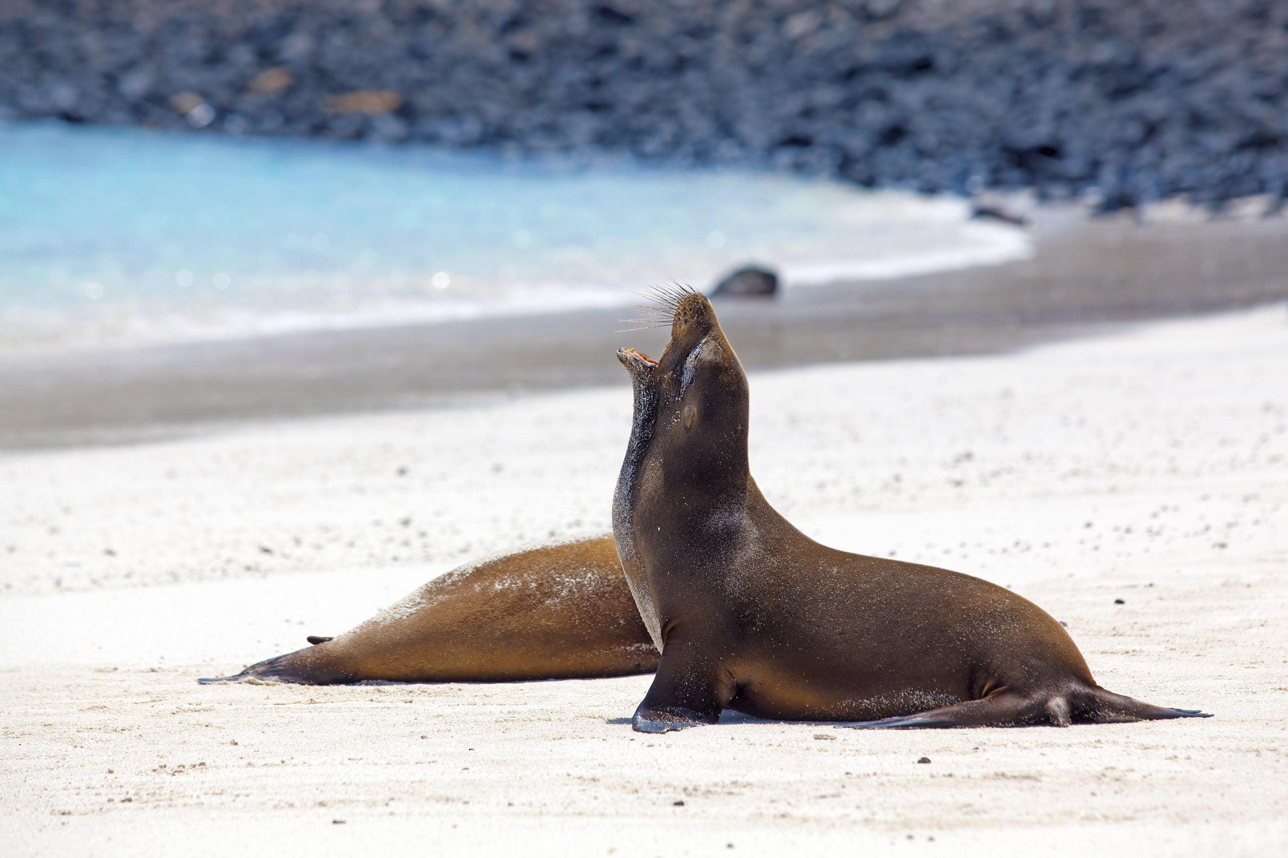 Galapagos by land