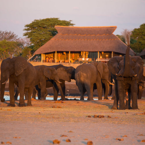 Camp Hwange, Hwange National Park