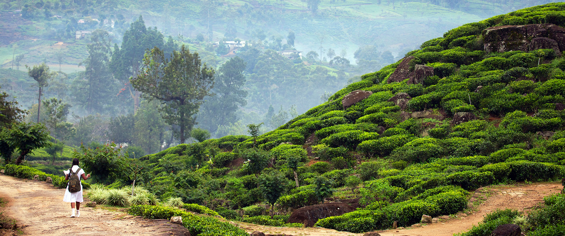 Sri Lanka: Colours & Flavours